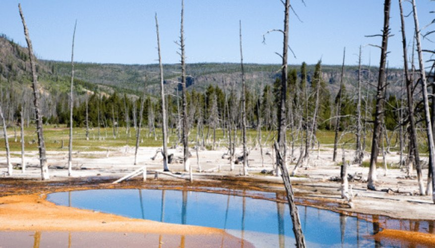 Yellowstone's hydrothermal features were a major reason the world's first national park was established.