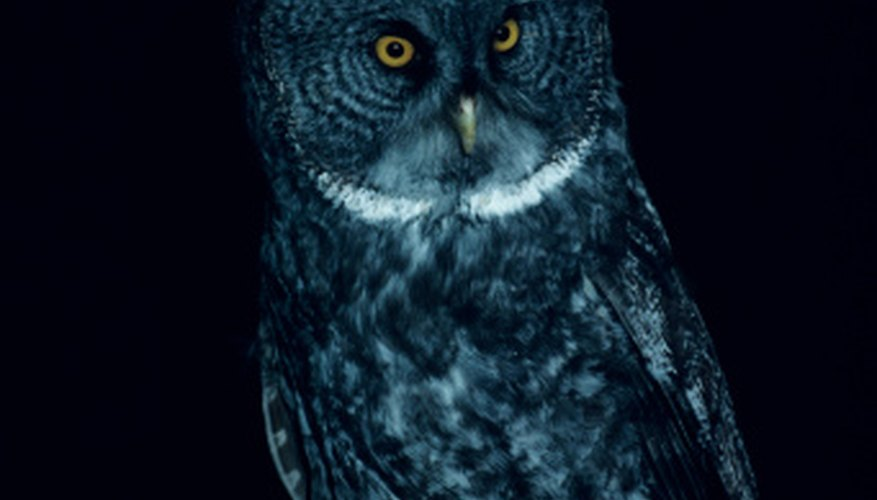 Owls have tapeta to aid nocturnal hunting, which is why their eyes appear to glow in low light.