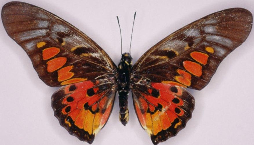 Proyectos Sobre La Metamorfosis De Las Mariposas Geniolandia