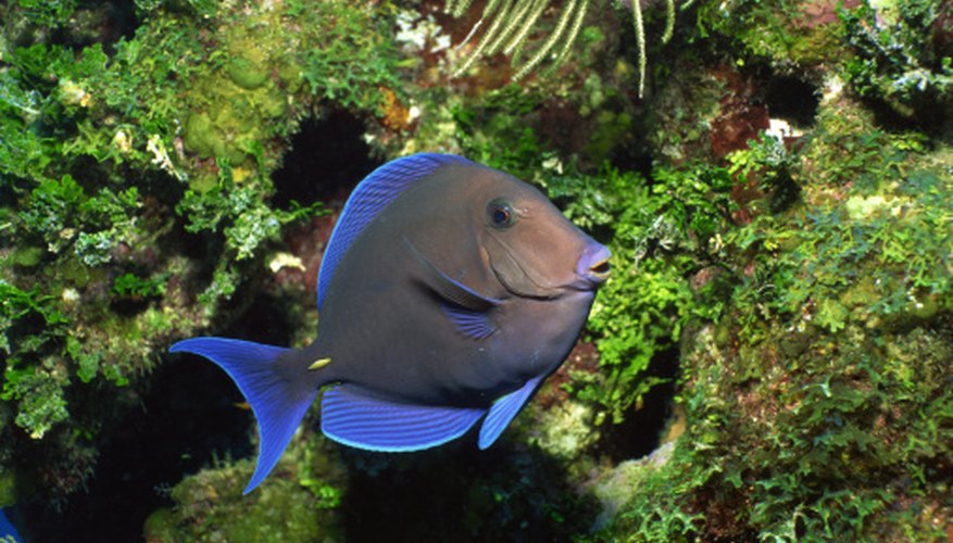 Herbivorous fish species typically find food and shelter around coral reefs.