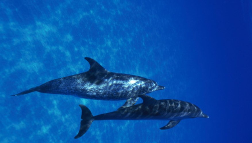 Studying marine mammals is one specialty of marine biologists.