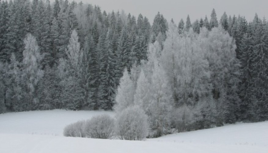 Taiga is characteristic of the subarctic climate.