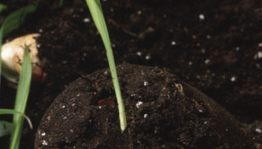 Phosphate fertilizers promote healthy blooms and root development in growing plants.
