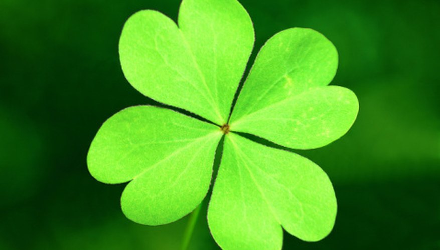 Clover is a weed that can multiply rapidly in your lawn, but you can often kill it.