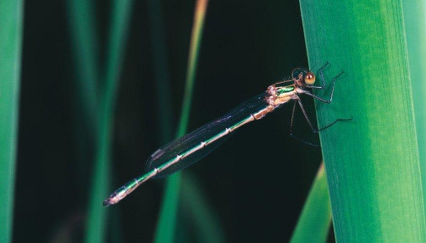The abdomen has 10 segments.