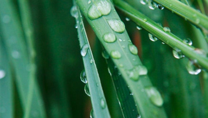 Varied precipitation levels contribute to a diverse native plant population along the Texas coastal plain.