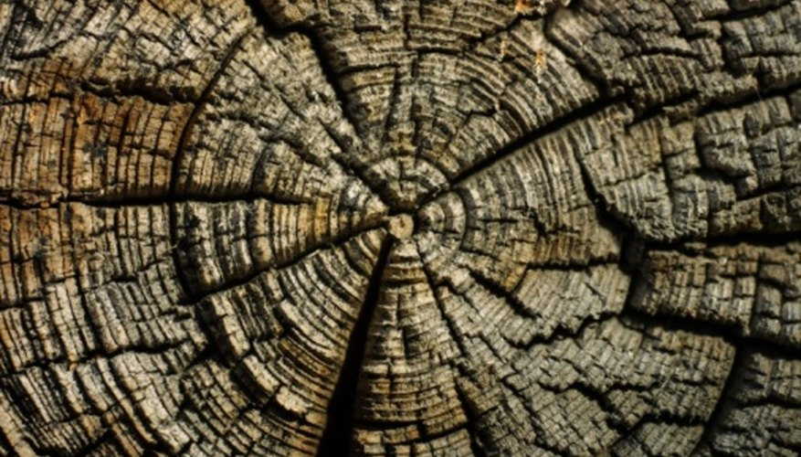 Concentric growth rings, like those of a tree, mean the flower is a dicot.
