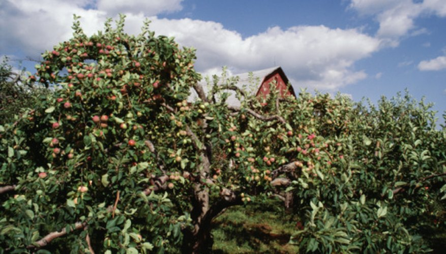 Apple Orchard Slogan Ideas | Garden Guides