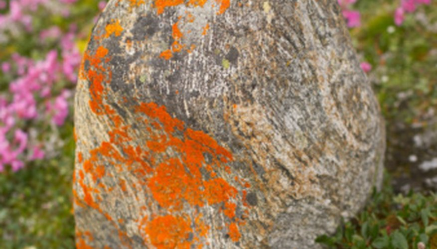 Lichen flourish on the Arctic tundra.