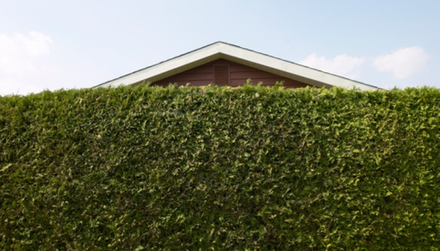 You don't need a fence. You can create a privacy hedge with bushes.