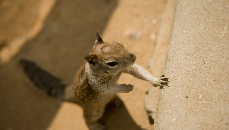 Squirrels change rapidly during the first 14 weeks of their lives .