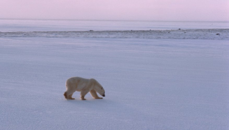 Tundra is the coldest existing natural environment.