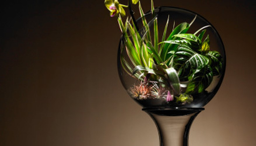 Terrariums are small, self-contained gardens.