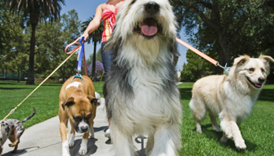 Walking your neighbor's dog can bring in extra cash.
