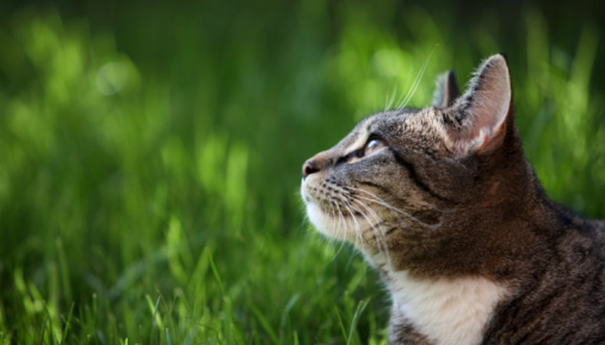Electric fences need to be installed properly in order to keep cats away from the garden.