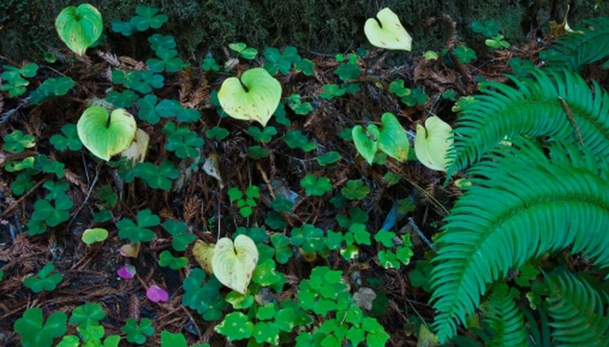 Invasive Ground Cover Plants Garden Guides