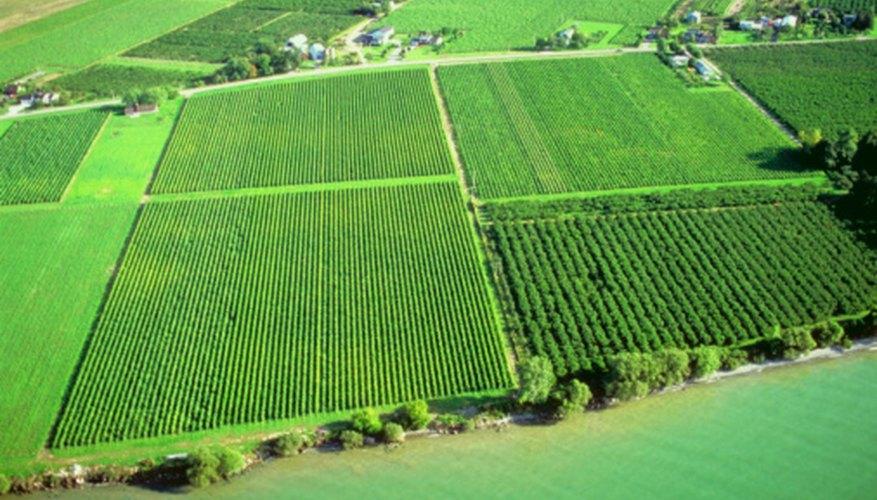 Ankanams are used to measure land area or acreage.