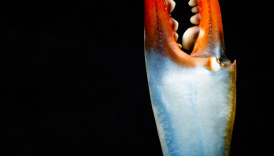 Blue crabs feature blue coloration on their legs.