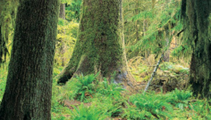Rain forests contain many different species.
