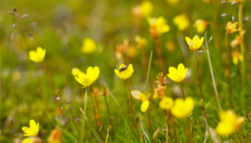 The tundra biome is home to more than 400 varieties of flowers.