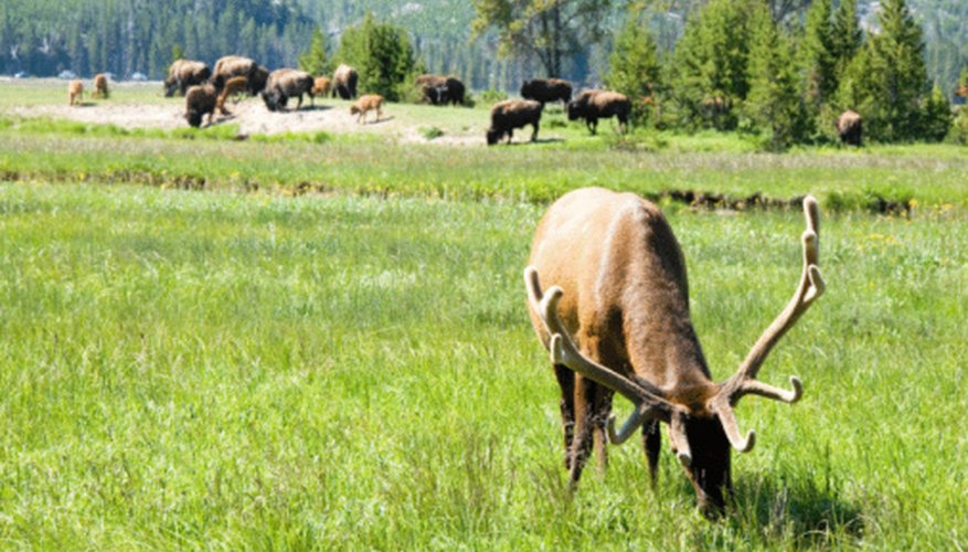The wastes of large grazing animals help maintain soil integrity.