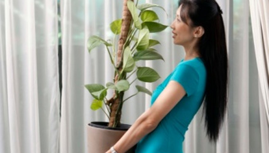 With proper care, your indoor plants can stay healthy for years.