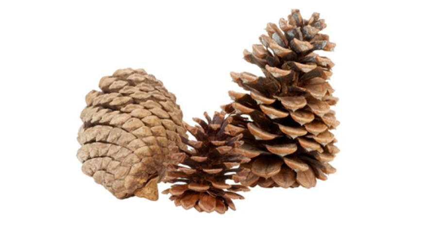 Add a natural element to your home decor with pine cones.
