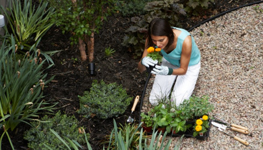 Sanitize the soil in your yard so you can plant in it