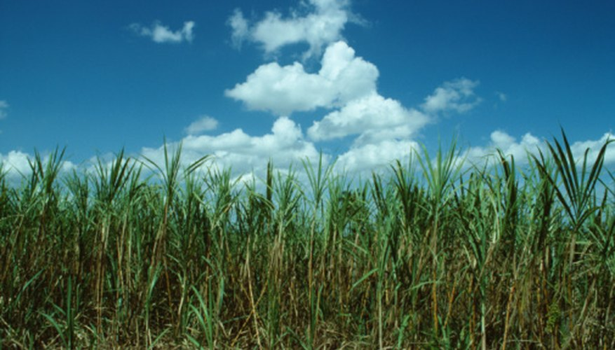 Sugarcane farms usually need some supplemental fertilization.