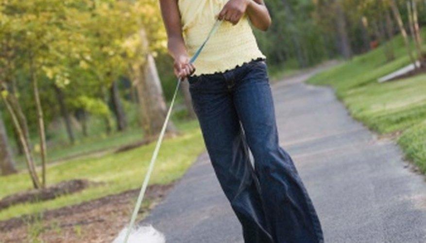 Comienza tu propio negocio de paseo de perros para ganar dinero.