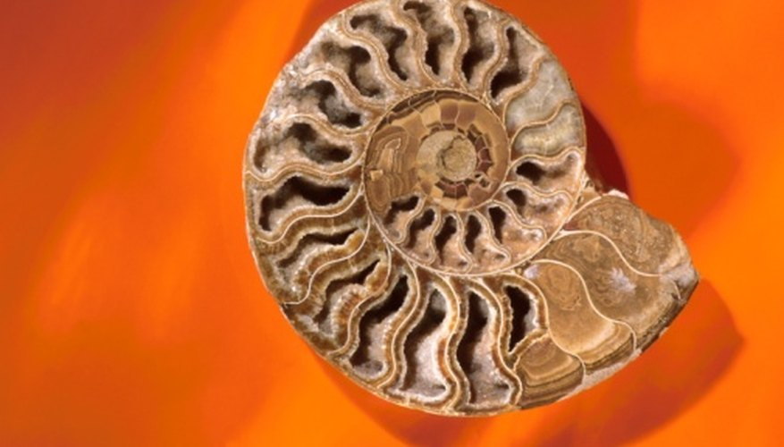 Cast fossils are formed when minerals replace the hard shell or skeleton.