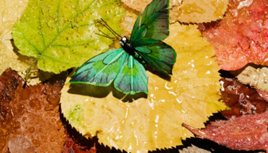 Butterfly colors are used for camouflage.