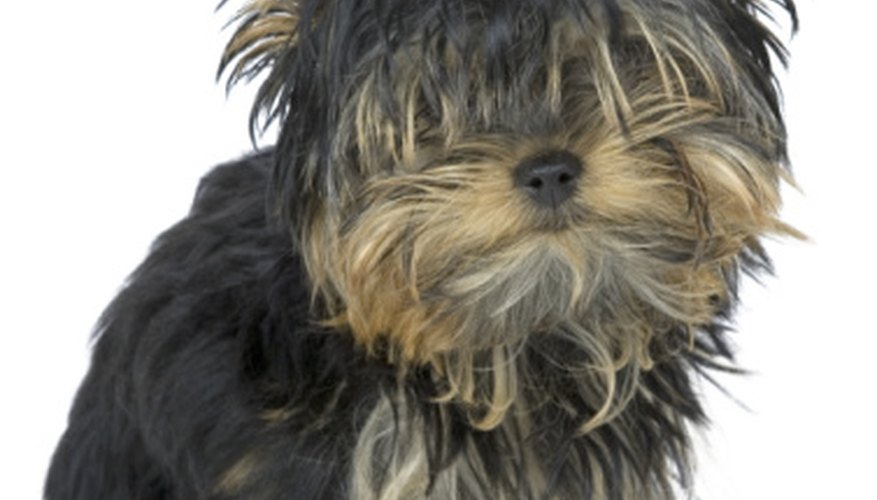 Dog grooming does not require a large expensive building to operate.