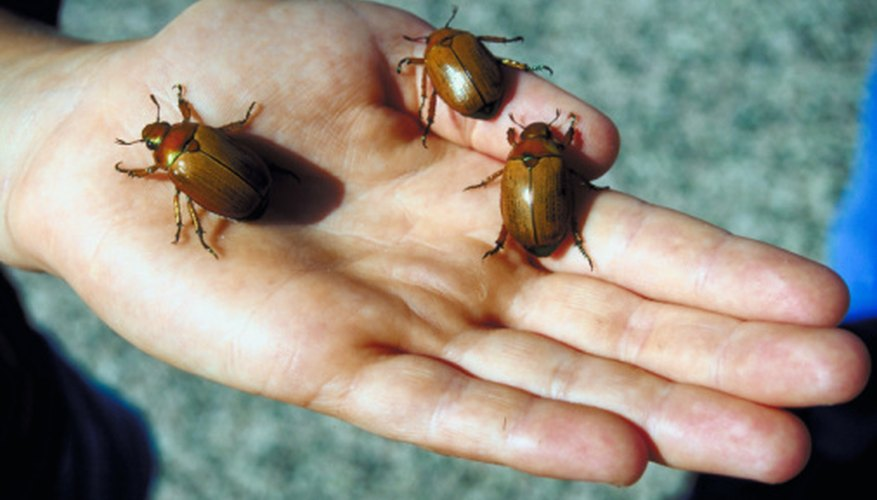 Beetles are found all over the world