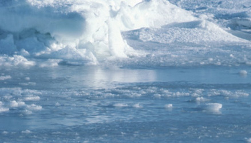 The Arctic and Antarctic tundras are home to few producer species.