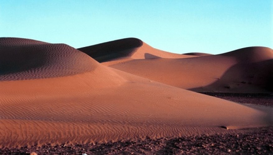 Reptiles, amphibians and mammals live in the Sahara desert.