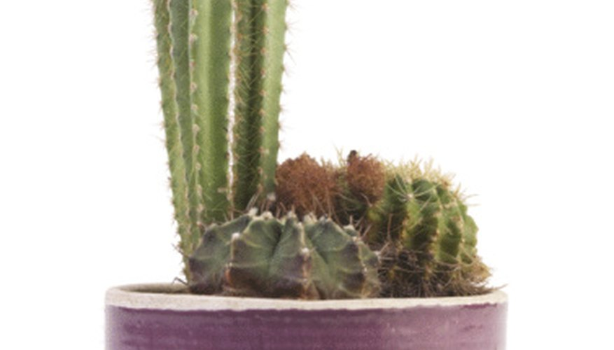 You can cut a cactus without harming the plant.