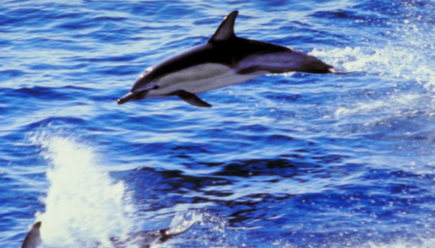 Dolphins care common inhabitants of the epipelagic zone since fish, their primary food, is abundant.