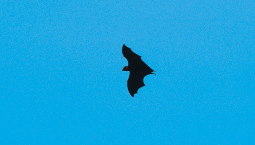 Fourteen species of bats are found in North Georgia.