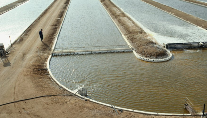 Algae play an important role in agriculture.