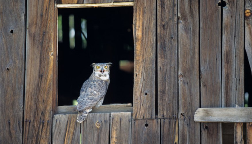 The Great Horned Owl will eat snakes.