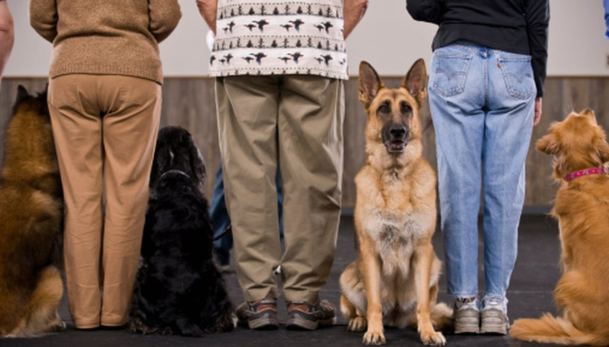 Some pet shops offer obedience training as a service.