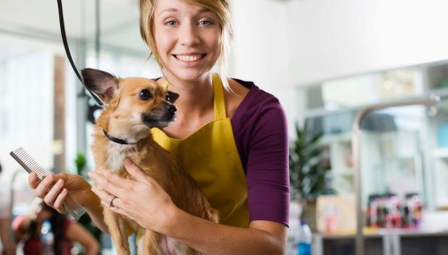 Los negocios de mascotas deben estar decorados pensando tanto en las personas como en los animales.