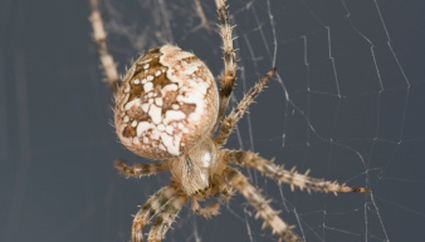 There are several reasons a spider might make himself at home in your house.