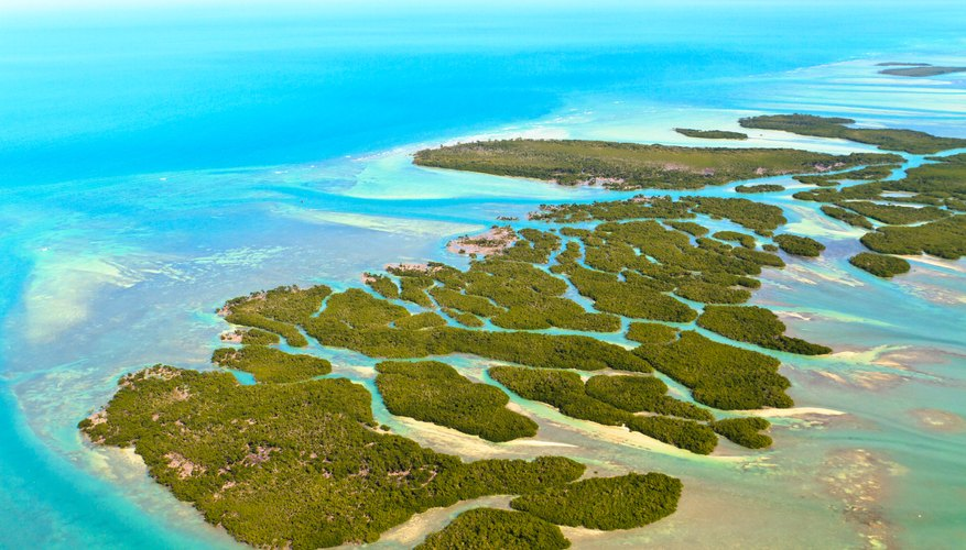 Best Time to Visit Florida Keys