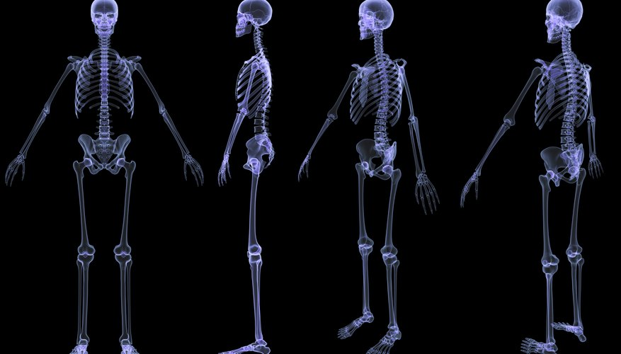 how to determine height through the skeleton sciencing. Black Bedroom Furniture Sets. Home Design Ideas
