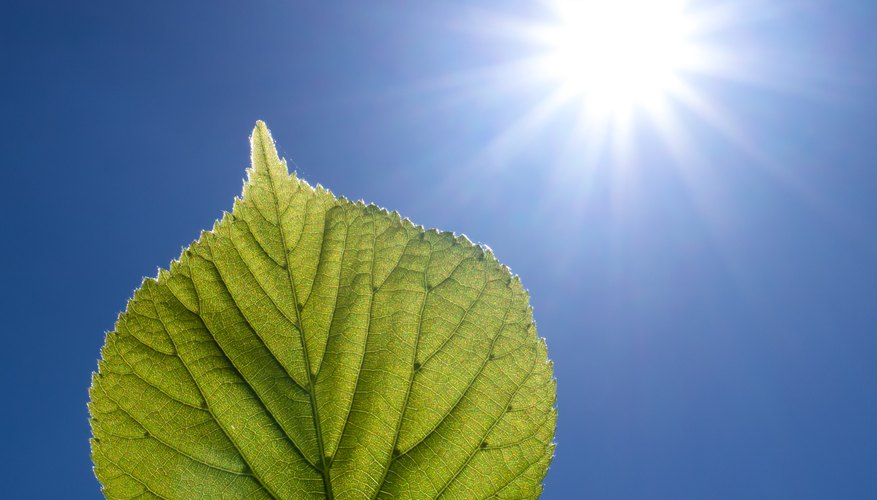 The Differences Between Photosynthesis & Respiration