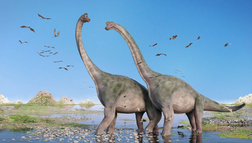 Sauropoden Arten