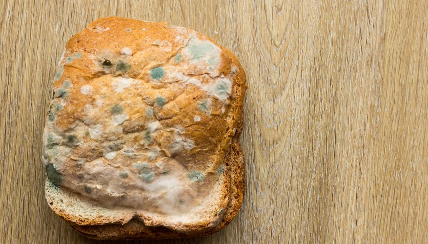 Most People Know That If They Leave Bread Out For A Long Time It Will Begin To Grow Mold However May Not Much About What Is How Forms
