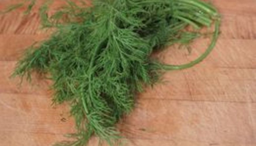 How to Freeze Fresh Dill